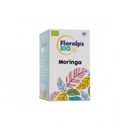 Infusion Moringa filtros